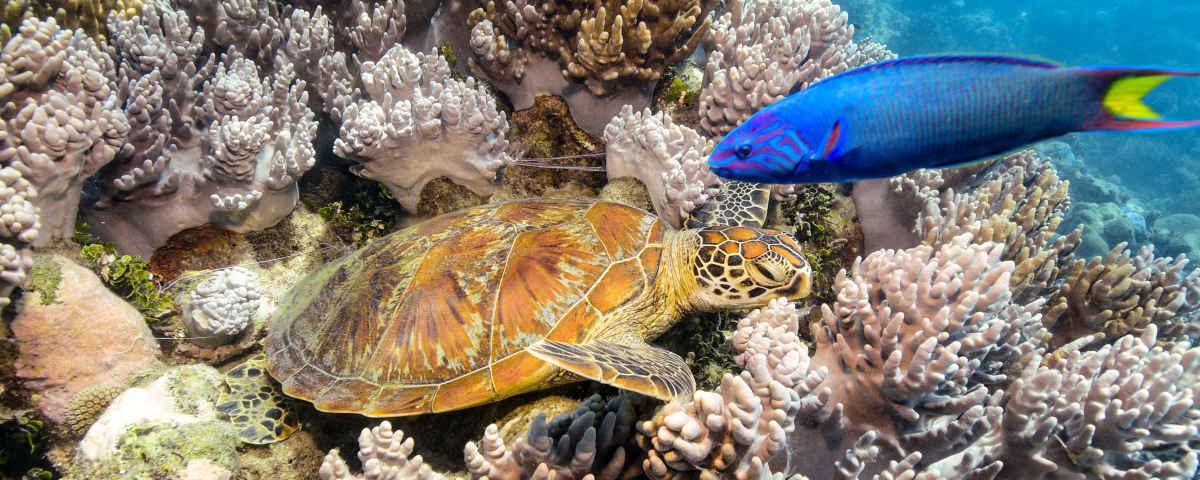 reef on Green Island