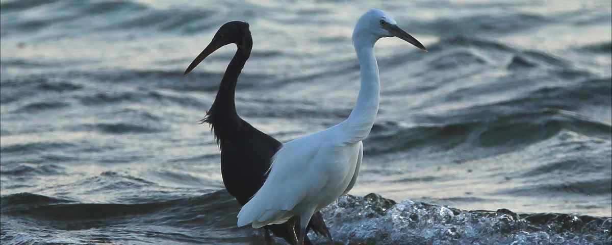 Birds on Green Island